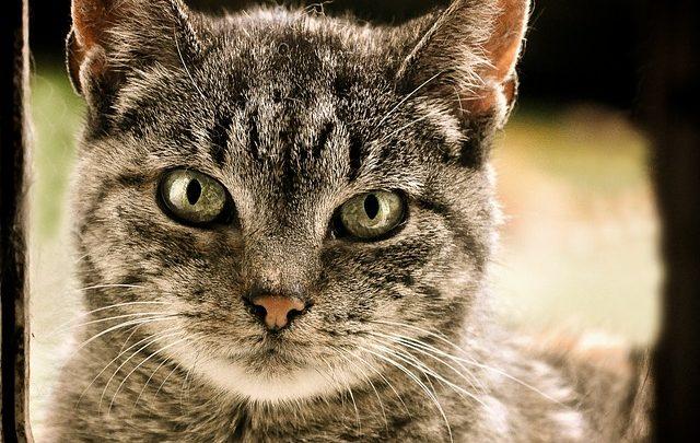 Comment choisir la taille d'une chatière?