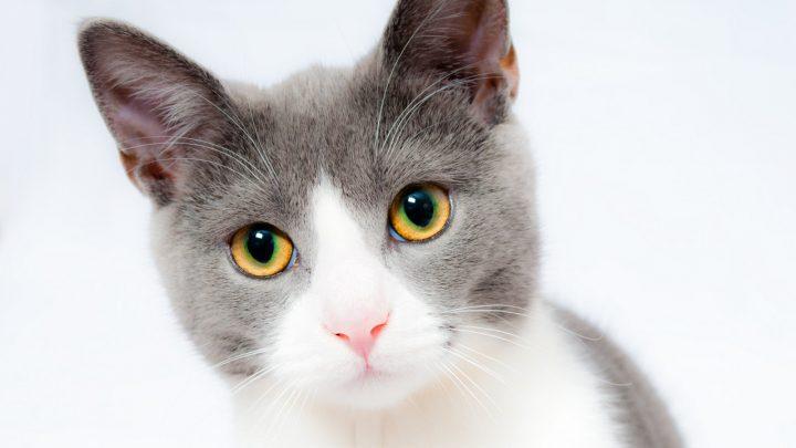 Comment faire passer un chat dans une chatière ?