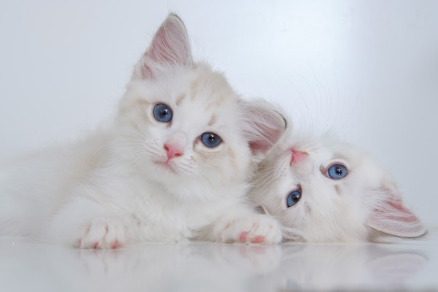 Quel type de gamelle pour chat ?